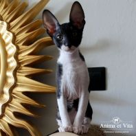 THEON Anima et Vita*by